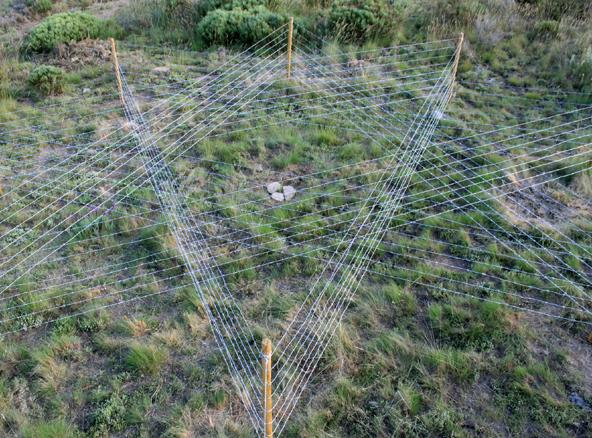 La fuga est en la rama la s laba es nutriente 2010 - Gallineros de obra ...